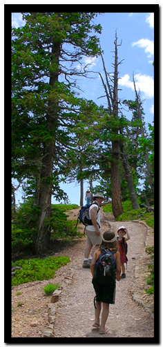 Bryce Canyon hiking:  Bristlecone Pine Trail