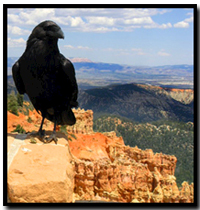 crow in Bryce Canyon