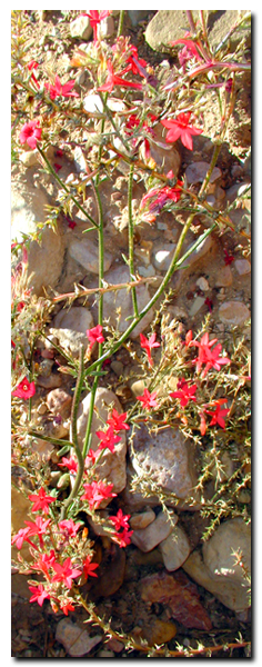 Flora of the Grand Staircase National Monument